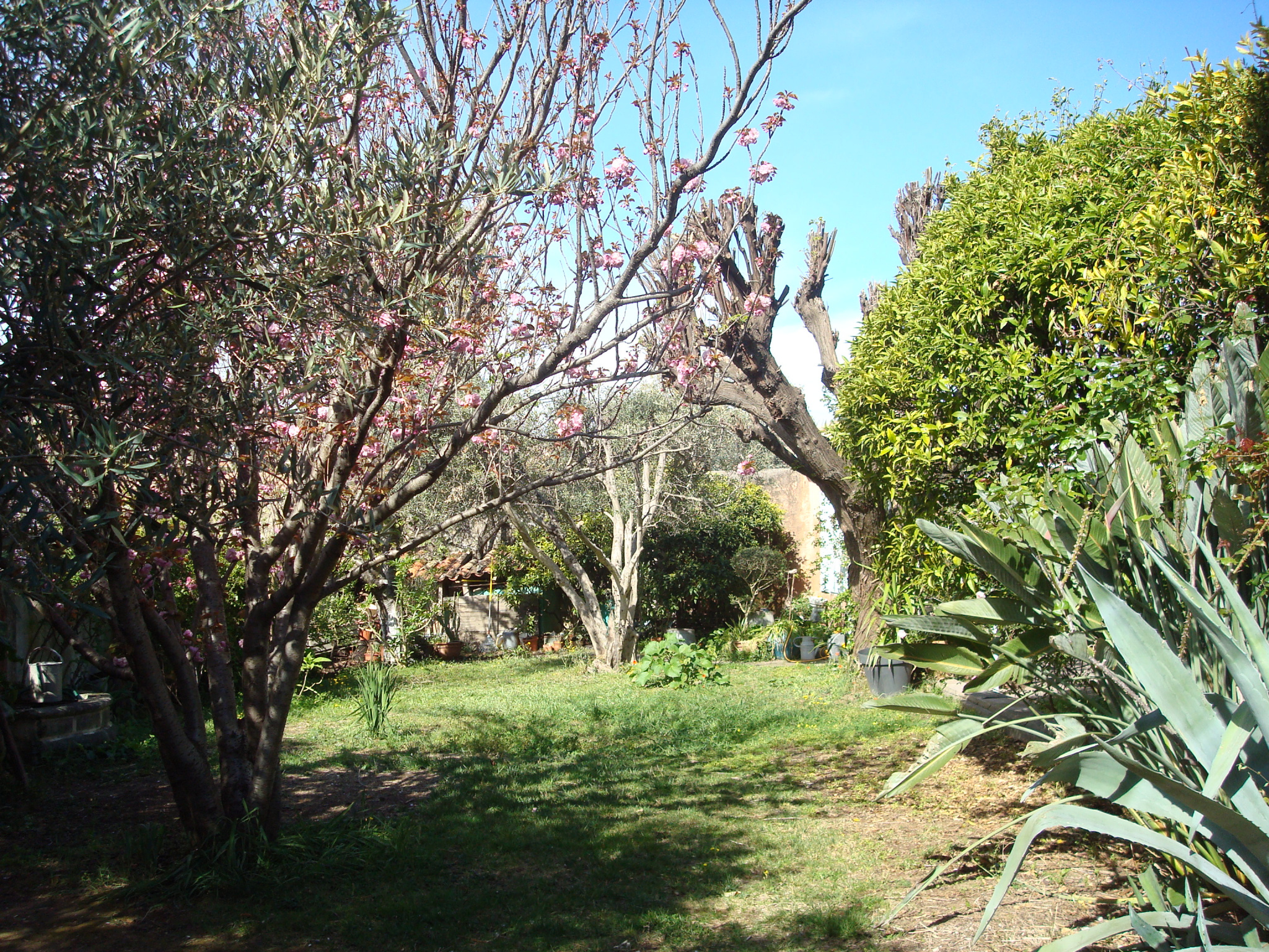 Image_3, Maison / villa, Ollioules, ref :3168
